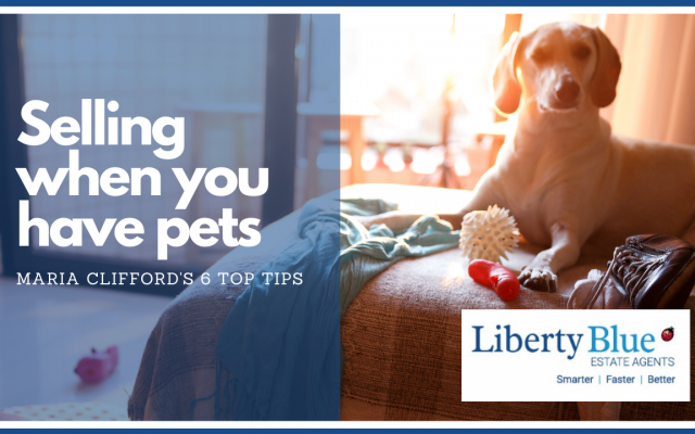 selling with pets top tips liberty blue auctioneers waterford