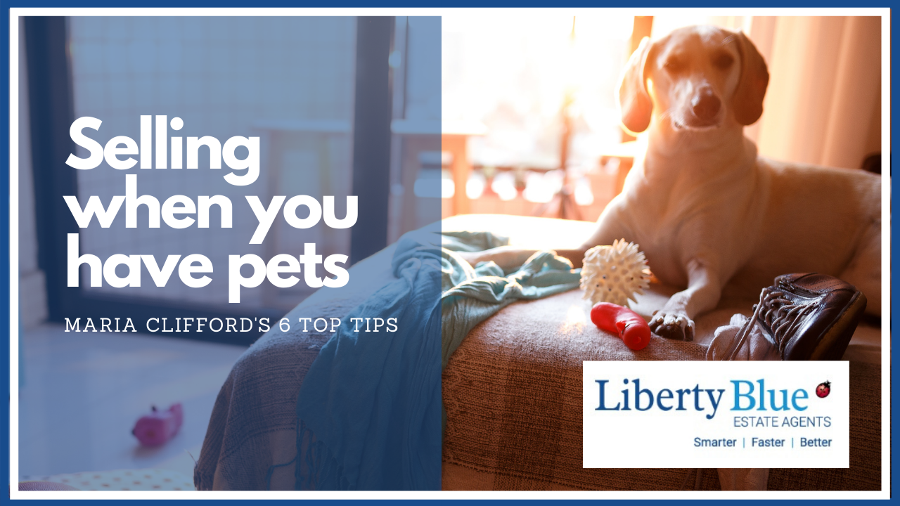 How best to sell your home if you have a pet – 6 top tips